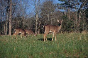 Dead Deer Removal Johns Creek